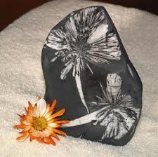 chrysanthemum stone and flower