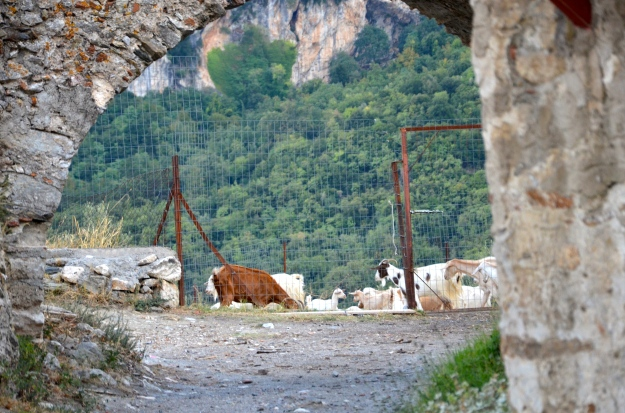 A herd of goats by Mystras, on Taygetos mountain.